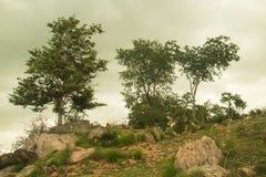 Landskap med berg och trädbakgrunden Royaltyfria Bilder