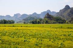 Landskap med berg, risfält och floden Royaltyfri Bild