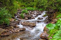 Landskap med berg, skogen och en flod Royaltyfria Bilder