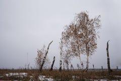 Landskap med björkar, på främst molnigt väder Första snö på höstsäsongen Arkivbilder