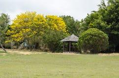 Landskap med blommande en Tabebuia träd fotografering för bildbyråer