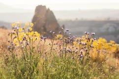 Landskap med blommor i sommar Arkivbild