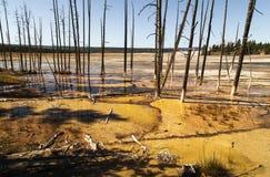 Landskap med döda träd i den Yellowstone nationalparken, WY, USA Arkivfoto