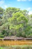 Landskap med damm Fotografering för Bildbyråer