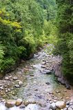 Landskap med den avskilda bergfloden bland frodiga gröna träd Royaltyfri Bild