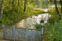 Landskap med den gröna sjön på en solig sommardag Arkivfoto