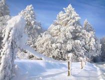 Landskap med den snöig skogen. Arkivfoto