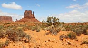 Landskap med den västra tumvantebutten Arkivbilder