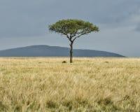 Landskap med det enkla trädet i vidsträckt vidd av gräs Royaltyfri Fotografi