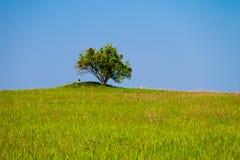 Landskap med det enkla trädet på kullen, äng och blå himmel Arkivfoto