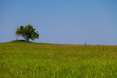 Landskap med det enkla trädet på kullen, grön äng och blå himmel Royaltyfria Bilder
