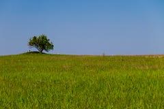 Landskap med det enkla trädet på kullen, grön äng och blå himmel Royaltyfri Foto