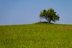 Landskap med det enkla trädet på kullen, grön äng och blå himmel Arkivfoton