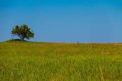 Landskap med det enkla trädet på kullen, grön äng och blå himmel Arkivbild