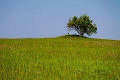 Landskap med det enkla trädet på kullen, grön äng och blå himmel Royaltyfri Fotografi
