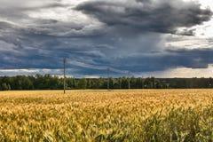 Landskap med det mogna fältet för råg och elektricitetsöverföringslinjen royaltyfri bild