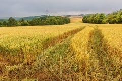 Landskap med det mogna kornfältet och horisonten Royaltyfria Bilder