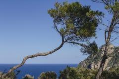 Landskap med det vridna trädet, Ibiza, Spanien Arkivbild