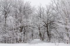 Landskap med en ekskog som täckas med frost Arkivfoton
