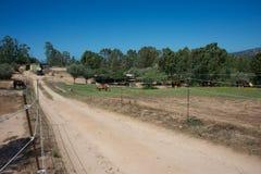 Landskap med en grusväg som korsar paddocken Fotografering för Bildbyråer