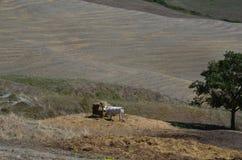 Landskap med en ko i Tuscany, Val dOrcia, Italien Royaltyfri Fotografi