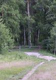 Landskap med en sikt till skogen royaltyfria foton