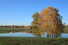 Landskap med en sjö i höst Royaltyfri Fotografi