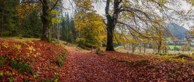 Landskap med en väg i skog arkivfoto