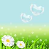 Landskap med ett grönt gräs vektor illustrationer