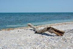 Landskap med ett torrt träd på kusten Arkivbild