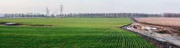 Landskap med fält för råg för vintervete jordbruks- och den smutsiga vägen -- vårlandskap, panorama Royaltyfri Bild