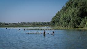 Landskap med fåglar och vegetation Royaltyfria Foton