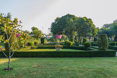 Landskap med gräsmatta och trädet Arkivbild