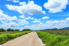 Landskap med havrefältet och blå himmel Arkivfoto