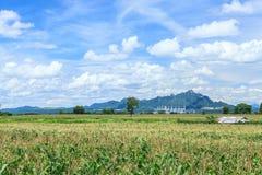 Landskap med havrefältet och blå himmel Royaltyfri Fotografi