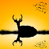 Landskap med hjortfullvuxen hankronhjortkonturn på solnedgången Arkivbild