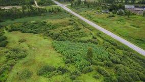 Landskap med huvudvägen och träd stock video
