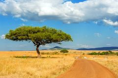 Landskap med inget träd i Afrika royaltyfri foto