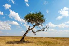 Landskap med inget träd i Afrika royaltyfri bild