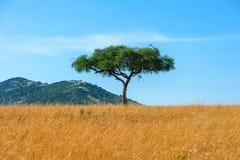 Landskap med inget träd i Afrika royaltyfria foton