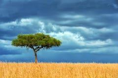 Landskap med inget träd i Afrika royaltyfria bilder