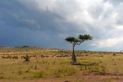 Landskap med inget träd i Afrika fotografering för bildbyråer
