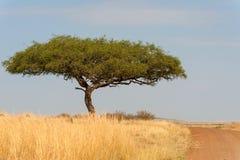 Landskap med inget träd i Afrika arkivbilder
