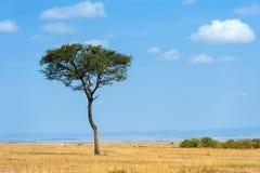Landskap med inget tr?d i Afrika royaltyfri bild