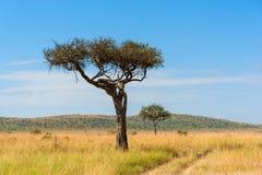 Landskap med inget tr?d i Afrika arkivfoto