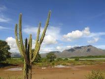 Landskap med kaktuns i våtmarker av den Unare lagunRamsar platsen och estuarine ekosystem i Anzoategui Venezuela royaltyfri fotografi