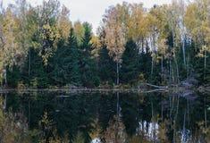 Landskap med mörka granar Mörk gran ovanför mörkt vatten royaltyfri fotografi