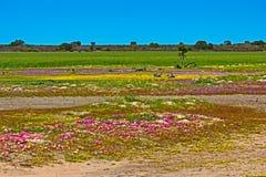 Landskap med röda, purpurfärgade gula vildblommor fotografering för bildbyråer