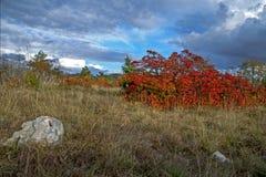 Landskap med röda Smoketree Arkivbild