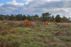 Landskap med röda Smoketree Fotografering för Bildbyråer